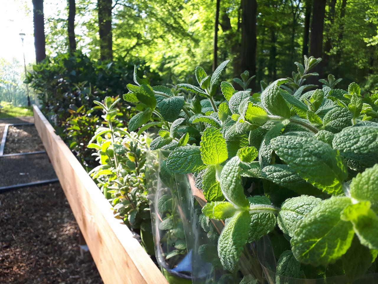 Zdjęcie przedstawiające zielone zioła w doniczkach