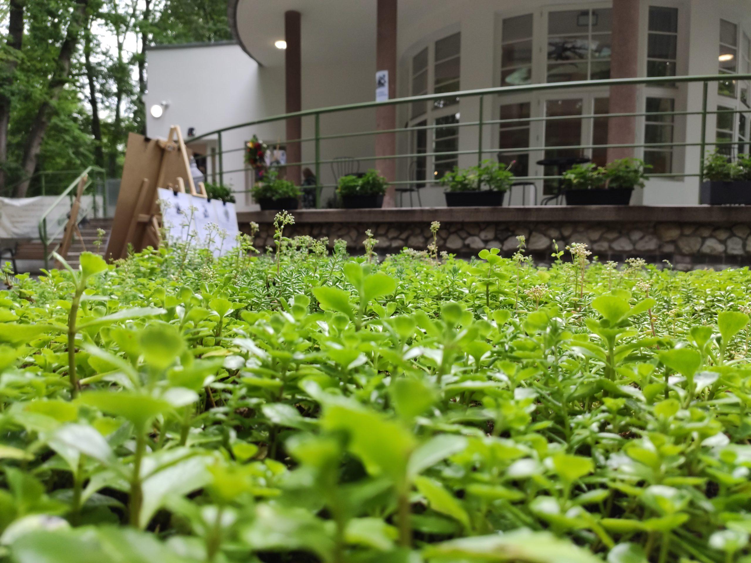 Zdjęcie przedstawiające zielony żywostół przed budynkiem CEE Symbioza