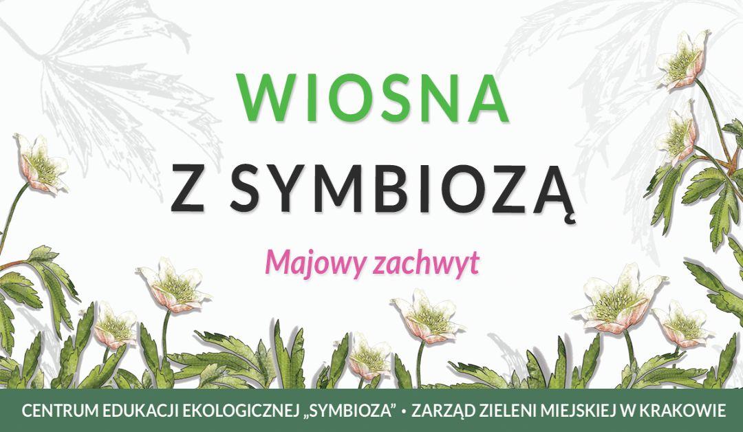 Jasny baner przedstawiający akcję Wiosna z Symbiozą - majowy zachwyt, w tle zawilce gajowe
